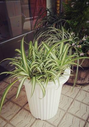 ★N様邸の観葉植物★