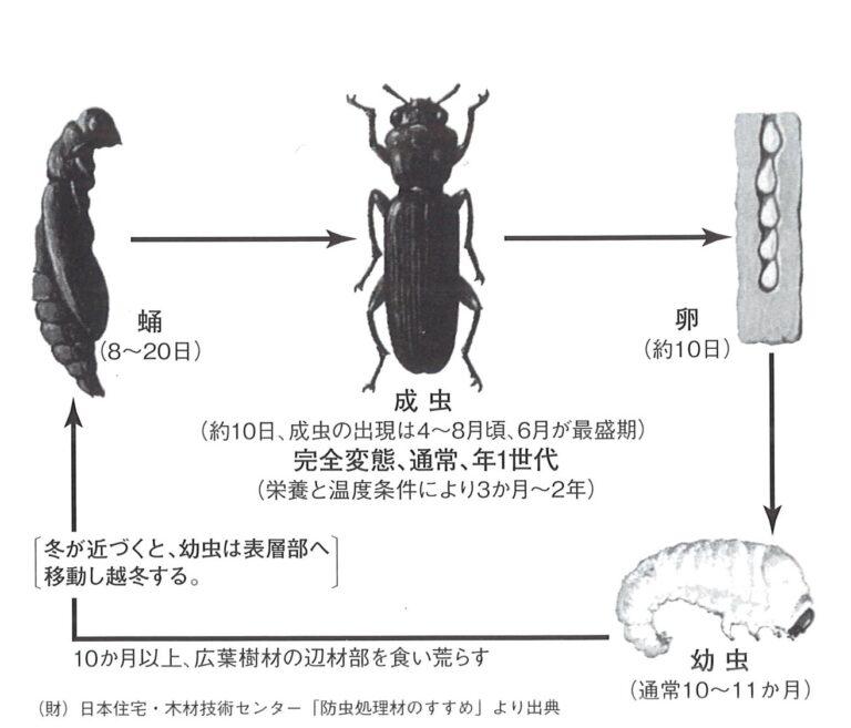 合板の防虫・防蟻・防腐について